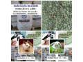 alfalfa-timothy-small-4