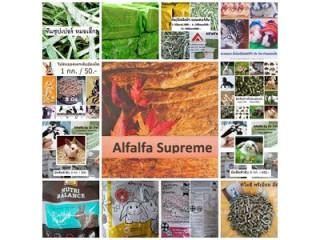 Alfalfa Timothy อัลฟัลฟ่า ทิโมธี หญ้าอาหารสัตว์คุณภาพ